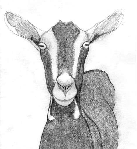 Goat Inspiration - Witten by www izzirainey com - Moorend